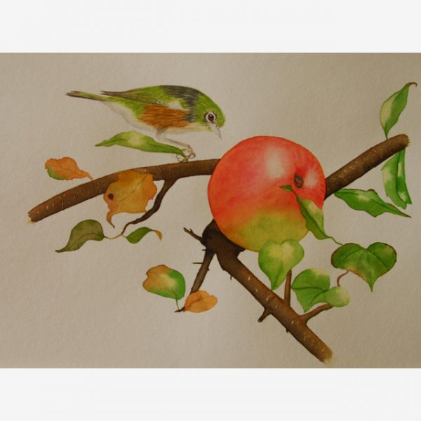 Waxeye and apple, Carolyn Judge Watercolours Square