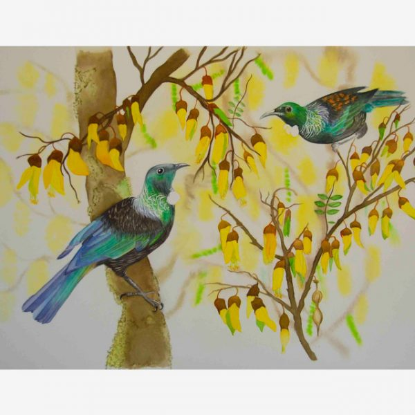 A pair of Tuis in a Kowhai Tree Square
